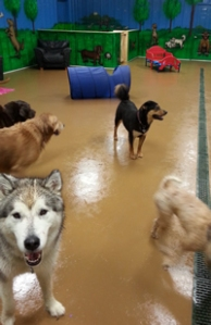 Dog Play Room
