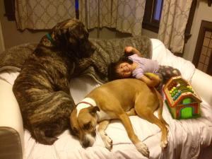 Fudge_Adopted