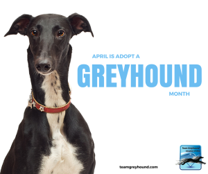 AdoptAGreyhound